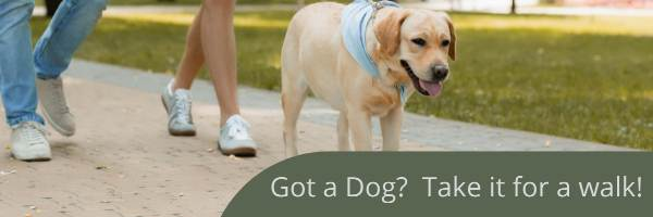 weight loss from walking a dog